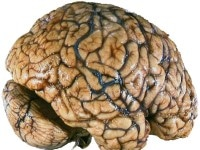 کوکائین چه بلایی بر سر رگهای مغز میآورد؟